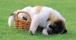 Средства защиты собак от блох